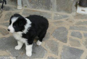 Moeder met 4 pupje ontmoet, liefde op eerste gezicht, aahh.. Het is dat we er al twee hebben..