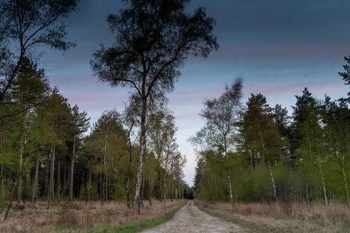 natuurbegraafplaats utrecht 3